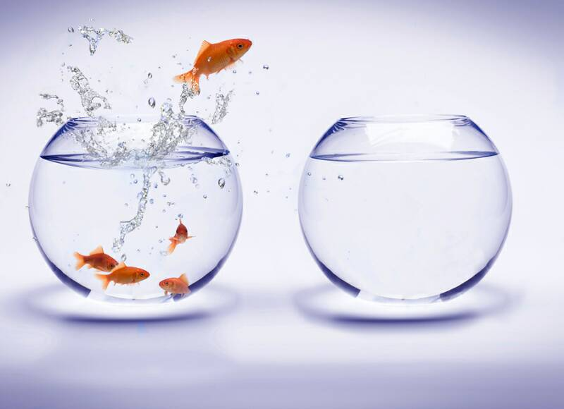 disruption et agilité